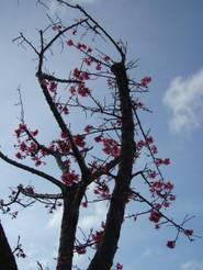 Okinawa_013