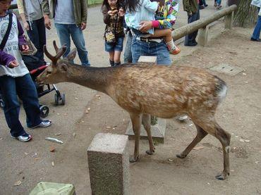 Nara_001